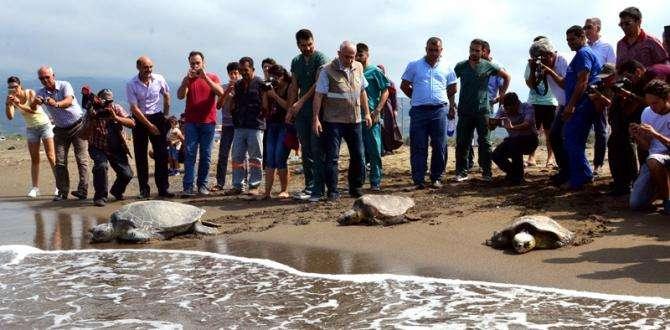 Tedavileri Tamamlanan Kaplumbağalar Samandağ'dan Denize Bırakıldı