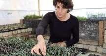 Elektrikli Battaniyede Zeytin Fidanı Üretiyorlar